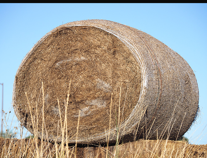 Bale-of-Hay